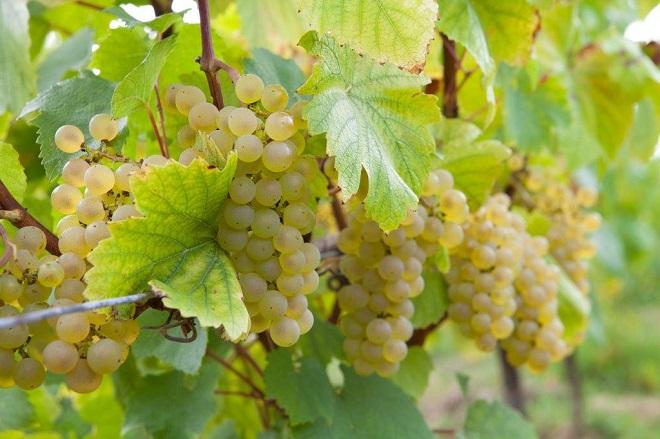 Chardonnay - Domaine Eric Chevalier