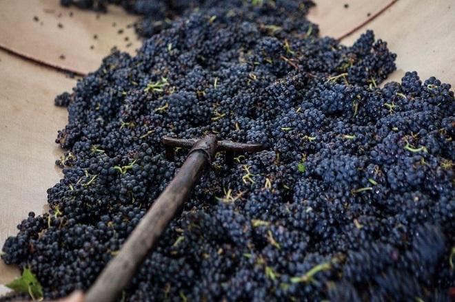 Pinot Noir - Domaine Eric Chevalier